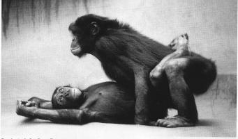 Jeu des PHOTOS liées aux personnages - Page 5 Bonobos