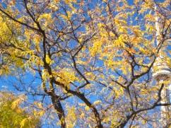 TREE SKY / SKY TREE
